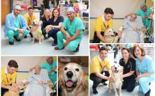 Therapy Dog 'Cody' makes his debut at Portiuncula University Hospital